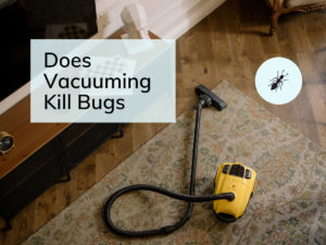Does Vacuuming Kill Bugs