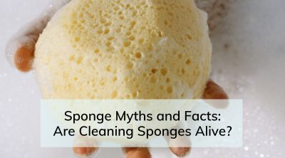 Are Cleaning Sponges Alive
